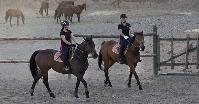 Atçılık ve Antrenörlüğü